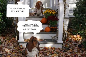 Two basset hounds sit on a front stoop and discuss the neighbors.